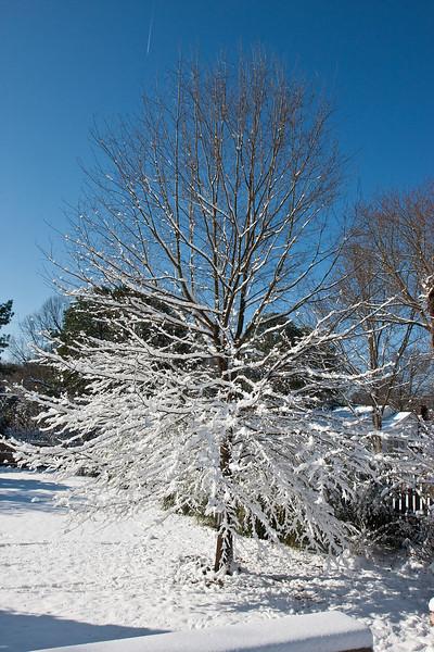 2009-03-01.more snow.040-44