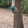 2009-01-29.Bird Feeder with Squirrel.079-23