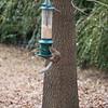 2009-01-29.Bird Feeder with Squirrel.068-22