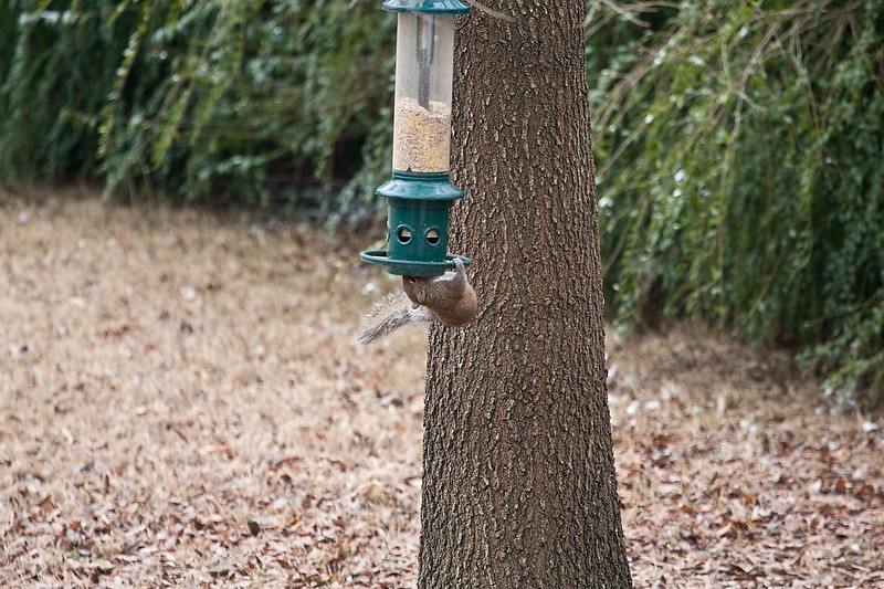 2009-01-29.Bird Feeder with Squirrel.087-25