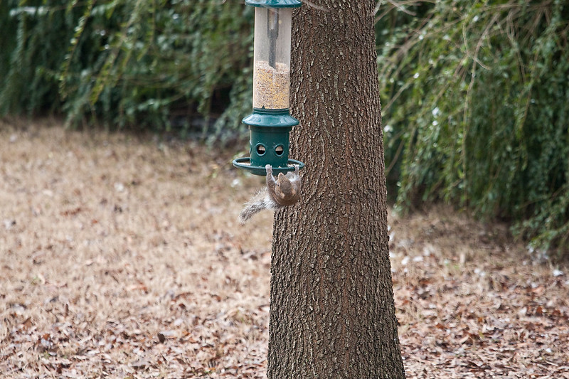 2009-01-29.Bird Feeder with Squirrel.088-26