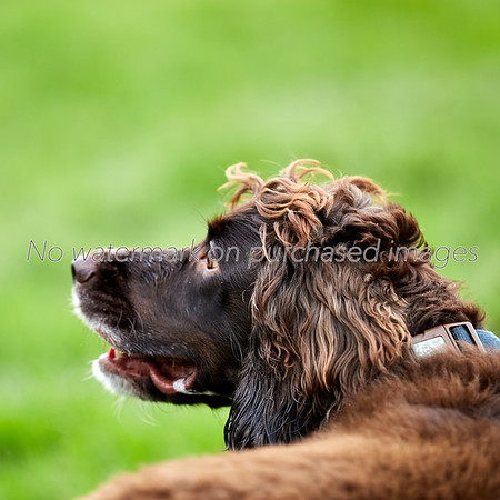 Landscape, Nature, Canford SANG, Dogs