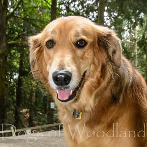 Woodland DP