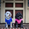 "Names: Keezer (left) and Lillypad (right); <br /> Breed: Schnoodle and Cockapoo; <br /> Origin of name: Keezer is a mispronunciation of ""Caesar"" from a video game by the owner's son. Lillypad often goes by Vader, as in Darth Vader, because she is ""naughty."" <br /> (Submitted photo)"