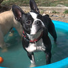 lucy would like to know why you're bothering her pool time?