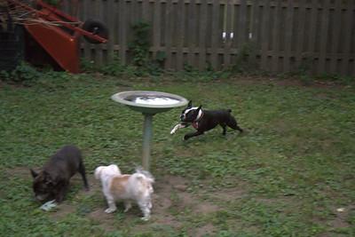 2010-07-25 Doggie Playdate