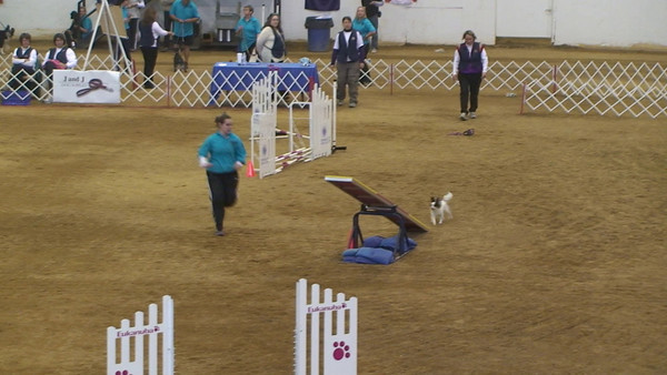 2011 NAC Final Round Small Dogs