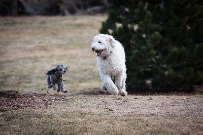 Low Flying Dogs