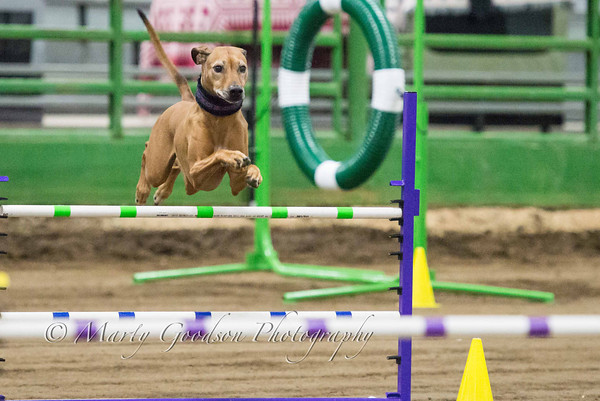 MBKC Agility Trial 9-29-13 Excellent