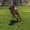 Ajax 12 months 0047