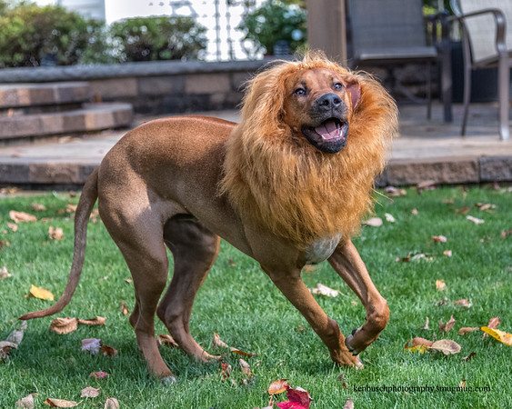Ajax the Lion Hearted