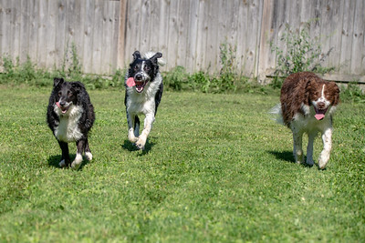 Aksel, Trixy and Cash