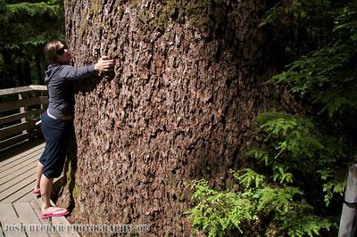 tree hugger cora