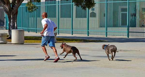 LA Coliseum Pitbull class 2014