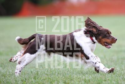 springer-lori