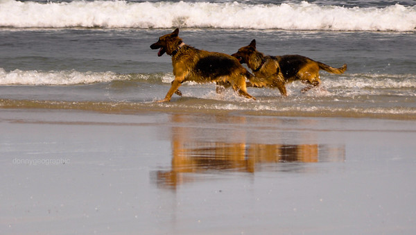 Dogs out for a  run
