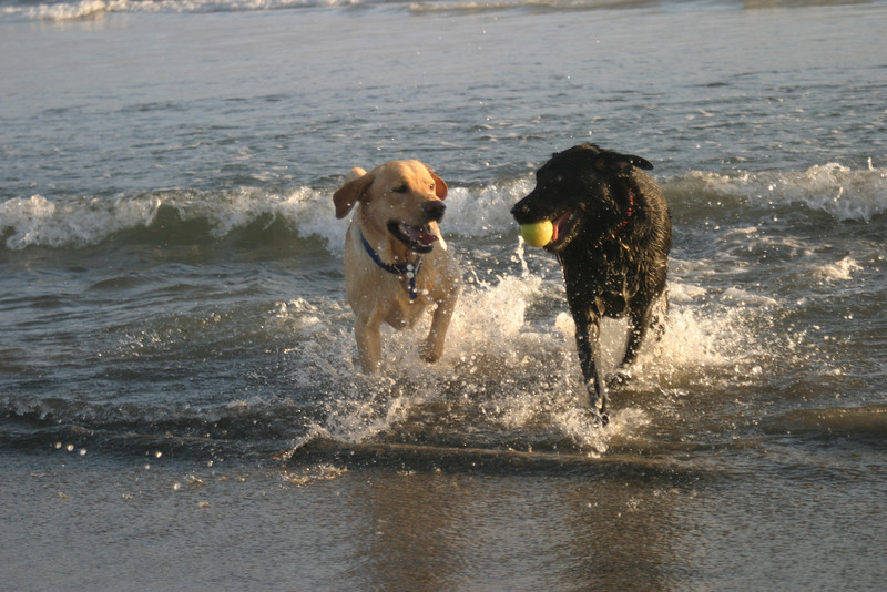 Maximus and Dudley<br /> Half Moon Bay, CA