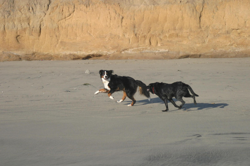 Zuni and Maximus<br /> Half Moon Bay, CA