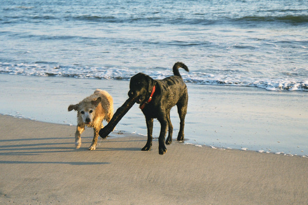 Fuzz and Maximus<br /> Half Moon Bay, CA