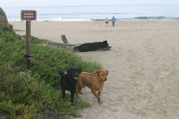 Millie and Maximus<br /> Half Moon Bay, CA