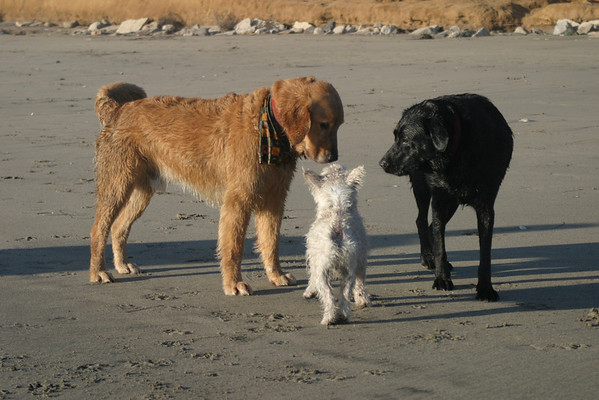 Maximus, Jake and a new friend<br /> Half Moon Bay, CA