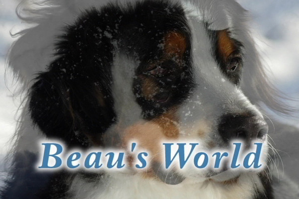 Beau's video - includes videos of Beau as a puppy