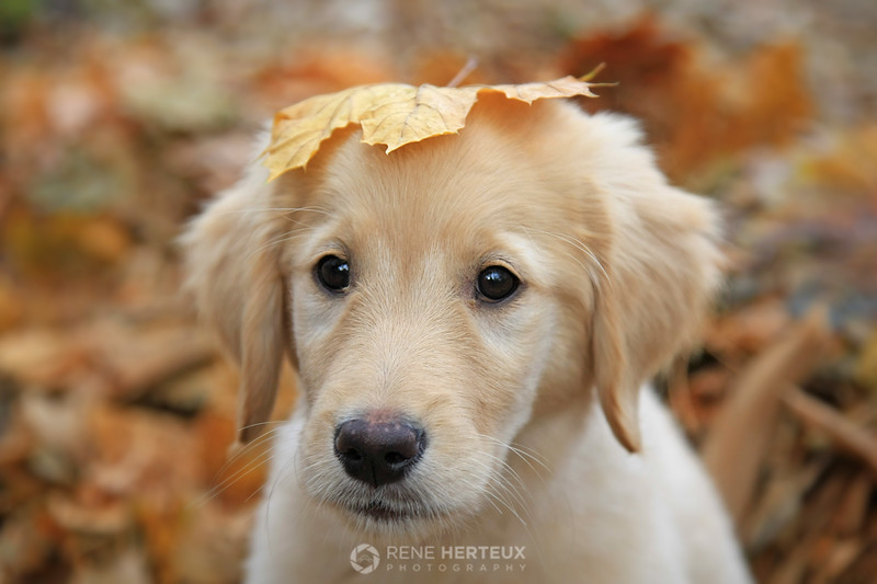 Bella with leaf on head
