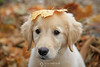 Bella with leaf on head