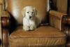 Bella on chair