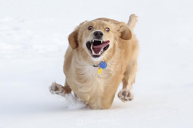 Crazy dog II