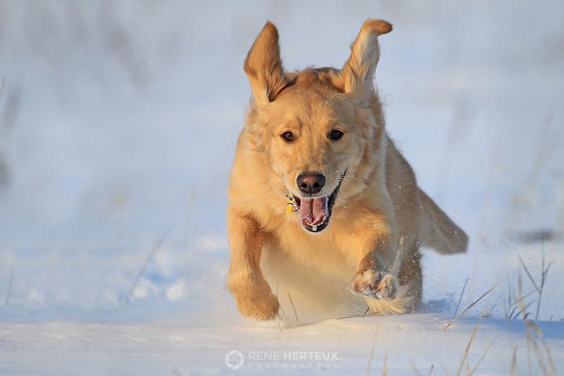 Bella bounding through the snow