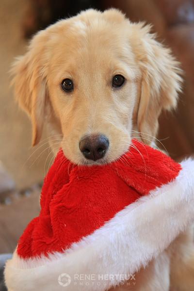 Bella with Santa hat