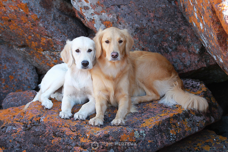 Piper and Bella posing