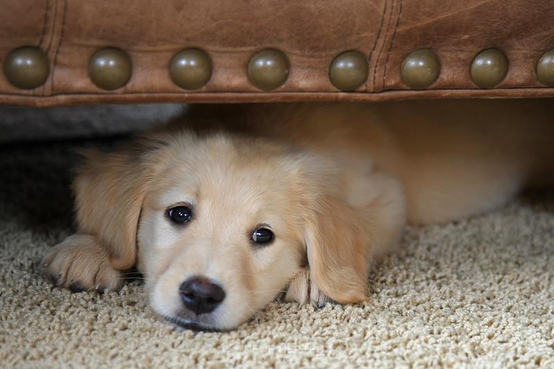 Bella under chair