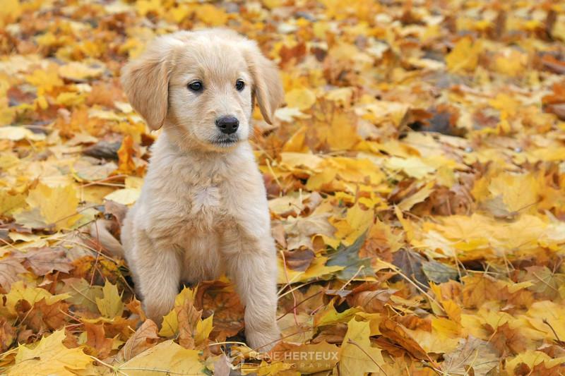 Bella on leaves