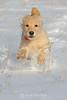 Bella running through the snow