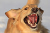 Crazy dog III