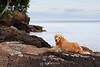 Bella on the rocks of Lake Superior