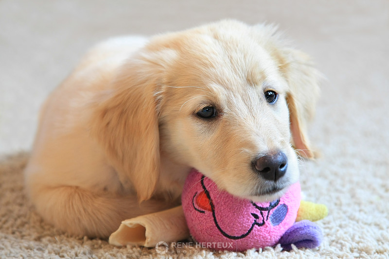 Bella and toy