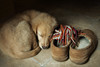Bella sleeping on scarf by slippers