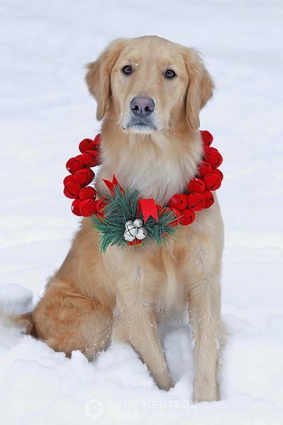 Christmas Bella