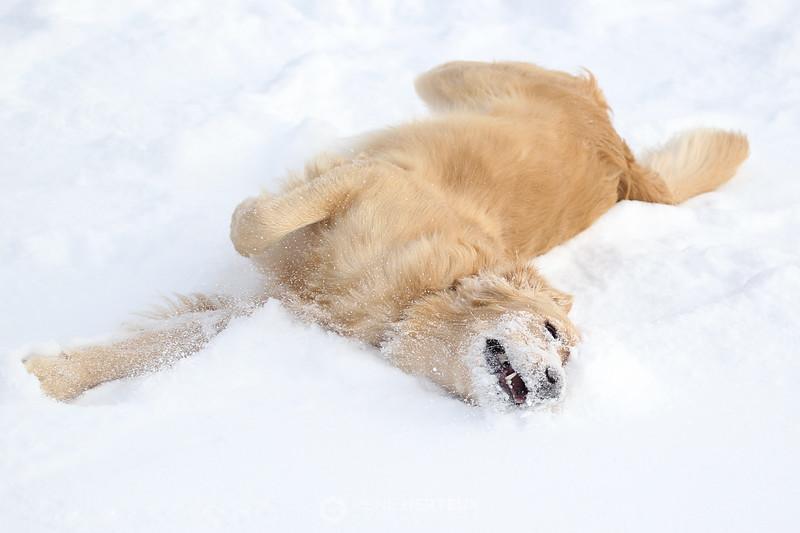 Taking a snow bath