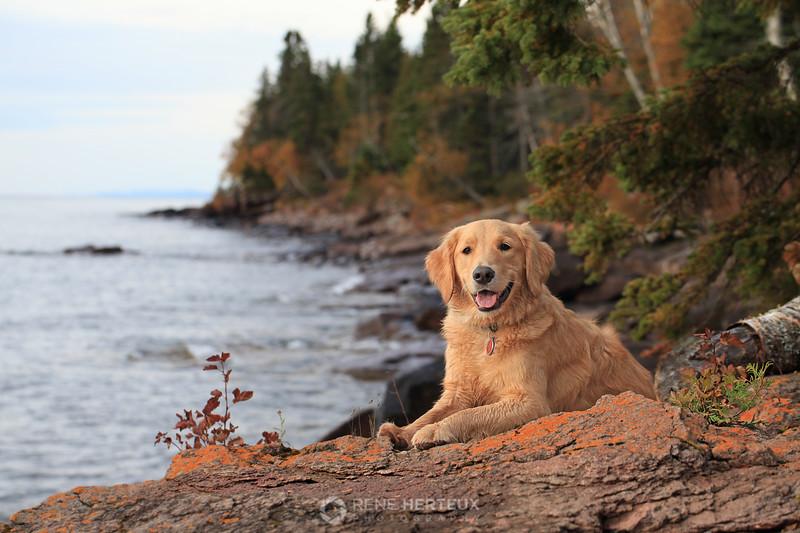 Bella at Lake Superior