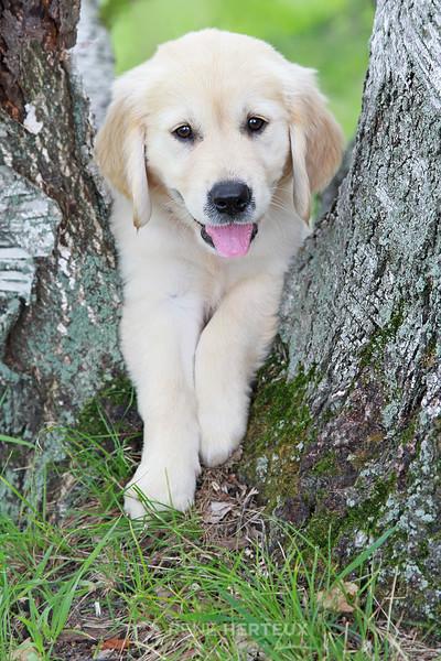 Piper in birch tree