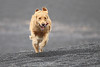 Bella running on beach