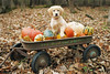 Bella in wagon