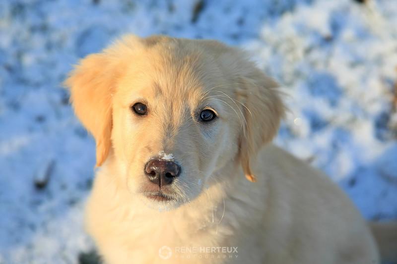Bella in snow