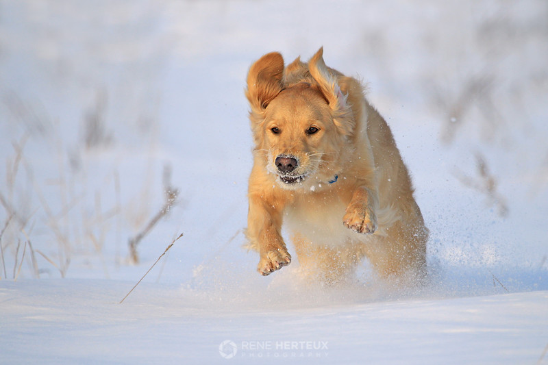 Bella bounding through the snow
