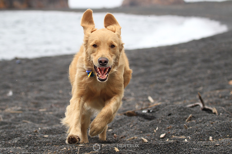 Bella running on beach