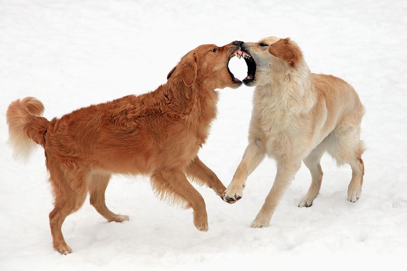 Bella and Piper brawl